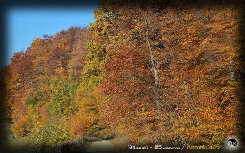 Bucovina (12)