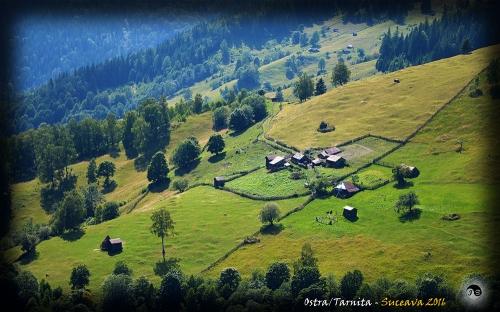Bucovina (16)