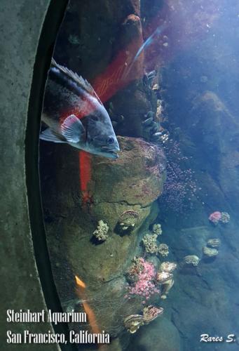 Aqua (4)