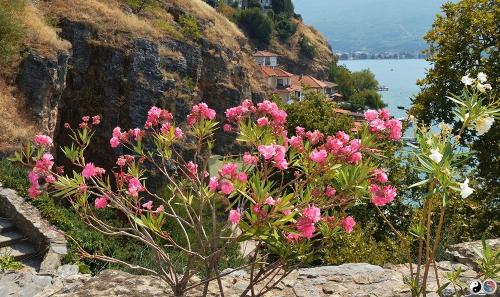 Ohrid (13)