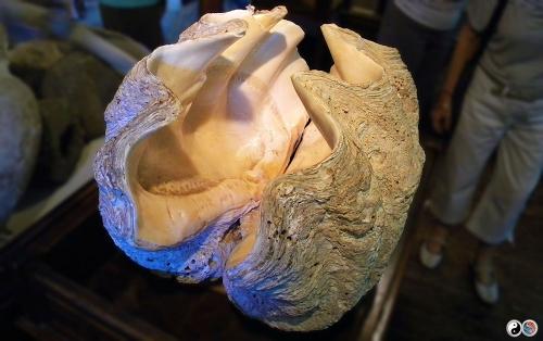 Paleokastritsa (24)