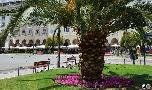 Salonic (9)