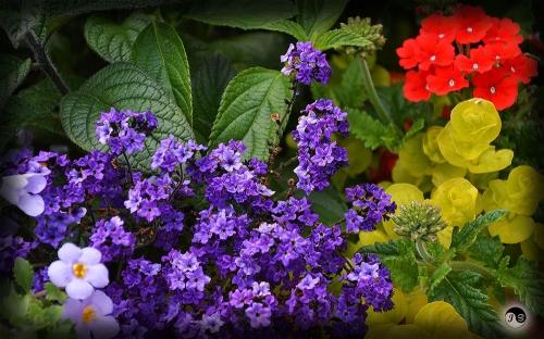 Bucovina Primavara flori (14)