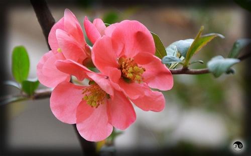 Bucovina Primavara flori (23)