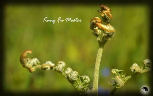 Bucovina Primavara flori (4)