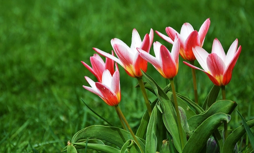 Bucovina Primavara flori (8)