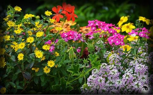 Bucovina Primavara flori (9)
