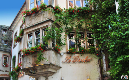 Strasbourg (50)
